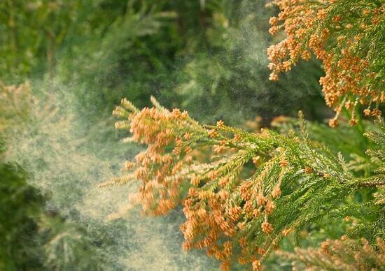 花粉症対策について